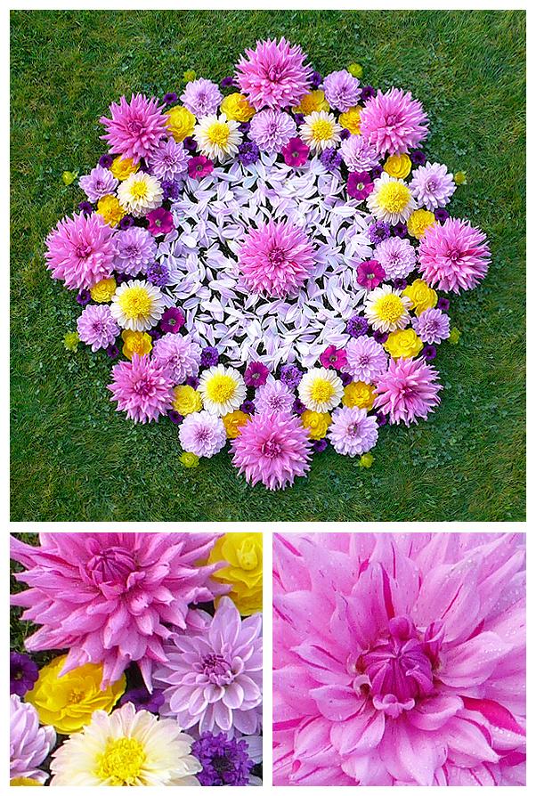 whitney krueger nature natural earth  environmental flower floral earthereal art botanical healing mandala
