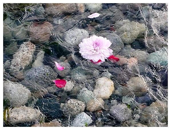 whitney krueger sacred natural nature botanical art flower water prayer healing