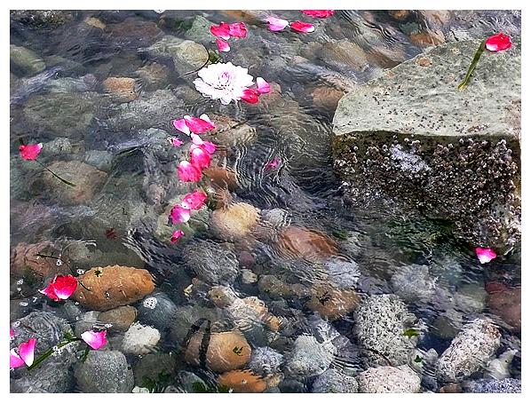 sacred natural nature botanical art flower water prayer healing