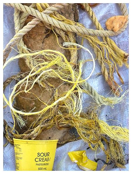 beach debris ocean coastal garbage trash clean-up marine wildlife plastic