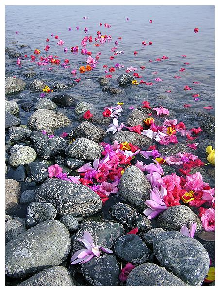 whitney krueger earthereal art visionary environmental botanical mandala natural nature water prayer