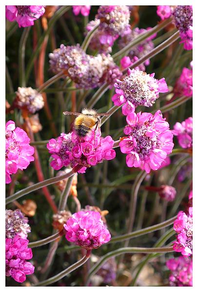 best plants flowers bees love food