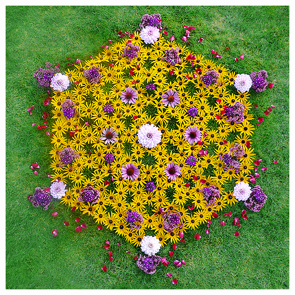 flower cubic geometry mandala harmonic  vibration floral light star grid life hexagon