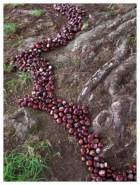 vancouver vanier park chestnut tree