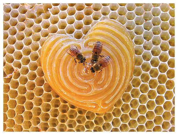 whitney krueger bee beeswax honeycomb labyrinth carving sacred geometry love heart