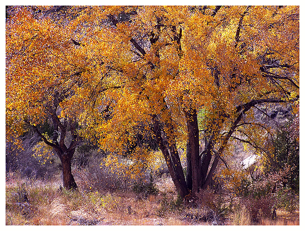 Embudo, Pilar, Rio Grande, New Mexico