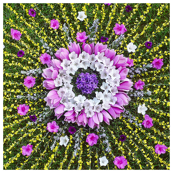 whitney krueger nature art earthereal magic botanical mandala flower floral magnolia flower