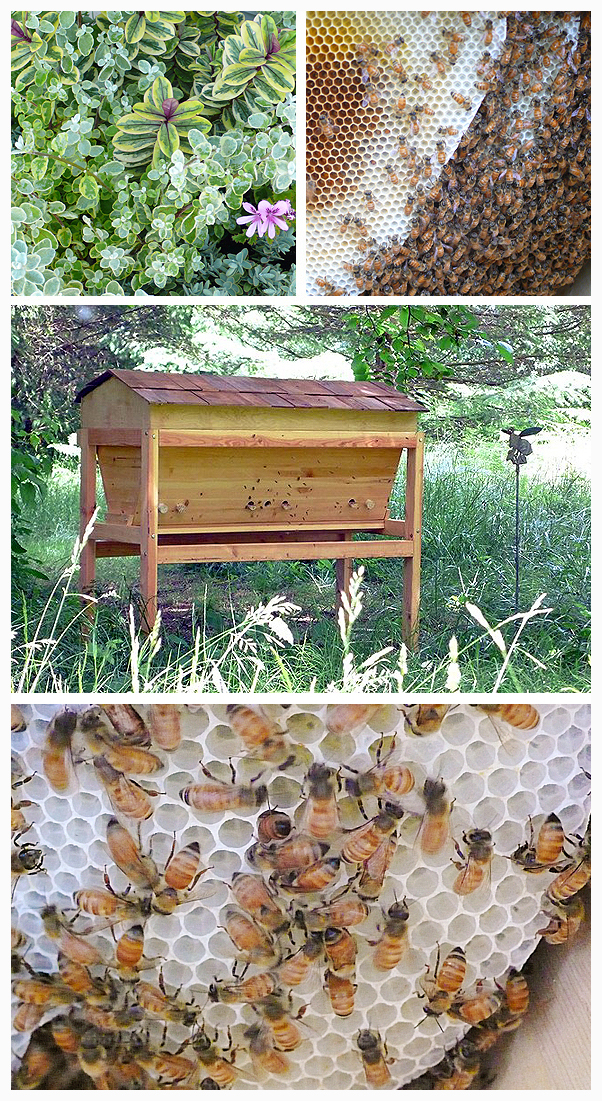 top bar hive beekeeping bee guardian DIY